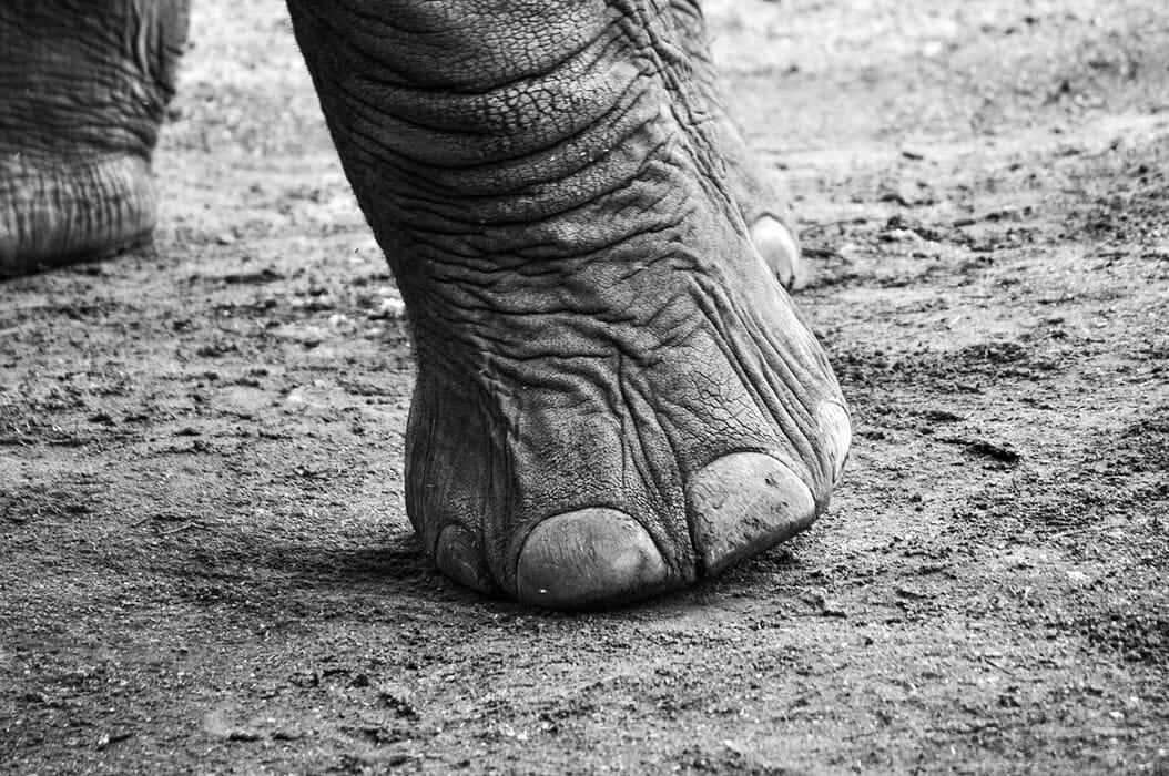 Elephant Sanctuary