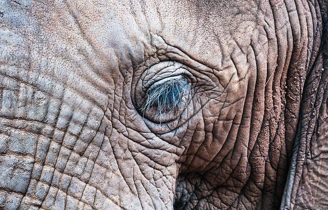 Elephant Sanctuary (Series)