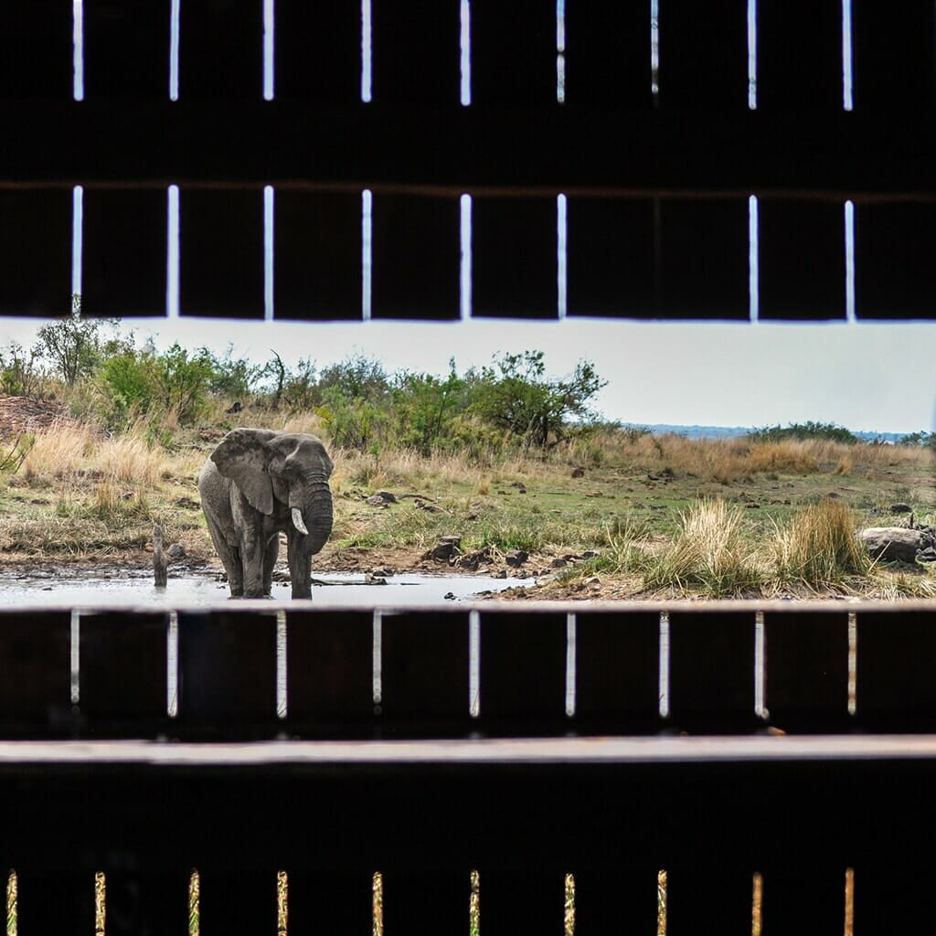 Elephant watering hole