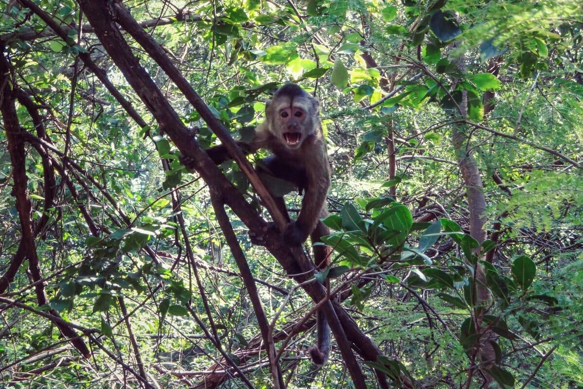 Monkey with attitude